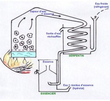 Système d'extraction des huiles essentielles